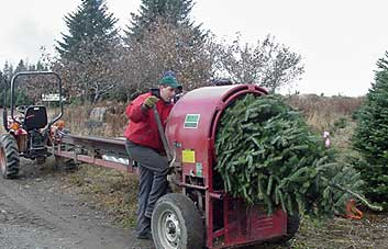 Mail Order Christmas Trees: New Hampshire Christmas Trees