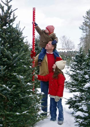 Choose and Cut Your Own Christmas Tree - Harvest Your Own Christmas Tree: New Hampshire Christmas Trees